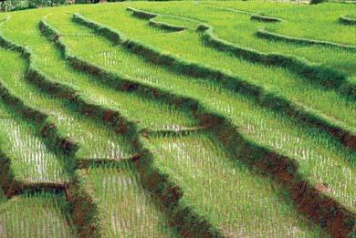 tecnica cultivo terraza: